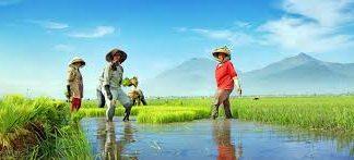Para petani